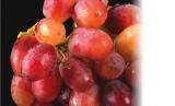 GRAPE TASTE – vynuogių programa: revitalizuojamoji, antioksidacinė procedūra